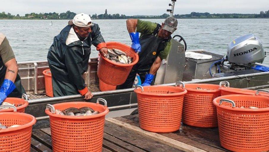 ЛОВЕ ТОНЕ БАБУШКИ: Почео санациони излов рибе на источној обали палићког језера
