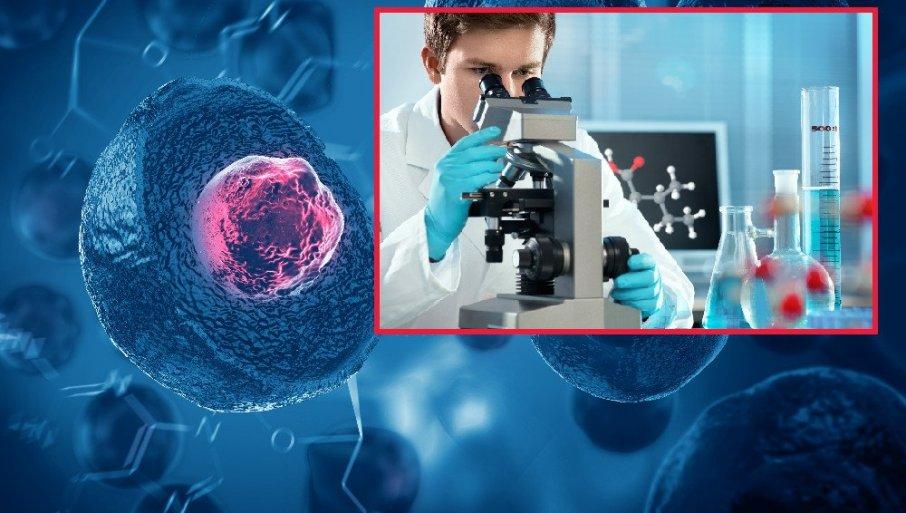 PRODOR U SVETU NAUKE KOJI JE POKRENUO MNOGA ETIČKA PITANJA: Naučnici su prvi put uzgojili embrione majmuna koji sadrže ljudske ćelije