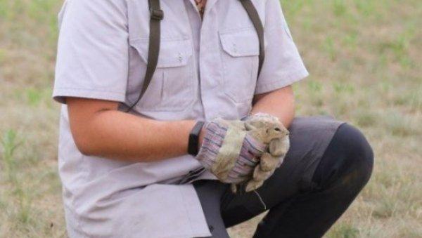 ТЕКУНИЦЕ ПОНОВО НА ПРИРОДНОМ СТАНИШТУ: Заштићена врста животиња враћена у Суботичку пешчару