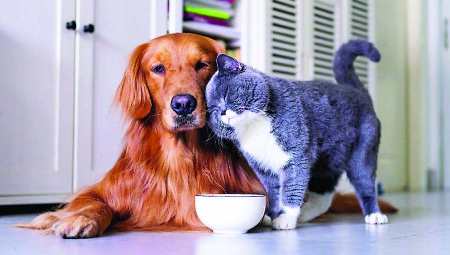 ISTRAŽIVANJE POKAZALO: LJudi sa kućnim ljubimcima su srećniji