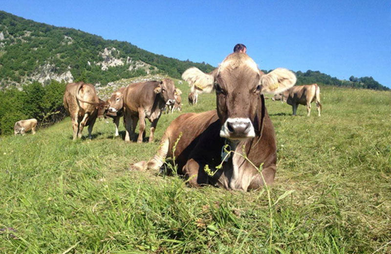 Предраг Ђокић знање је учио на данским фармама