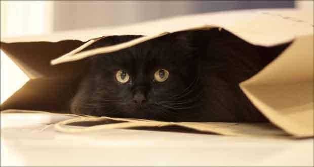 Velika prilično crna maca