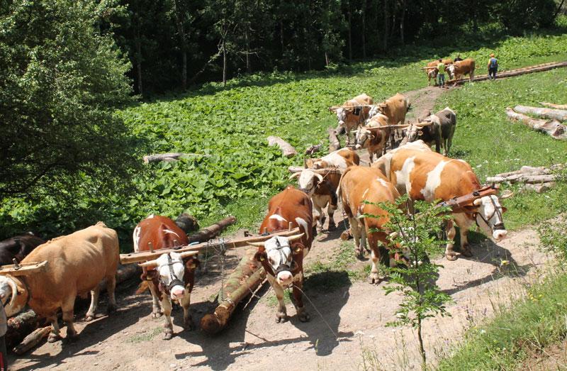 Одвајкада сељаци у Муртеници прискачу у помоћ, Фото Д. Гагричић