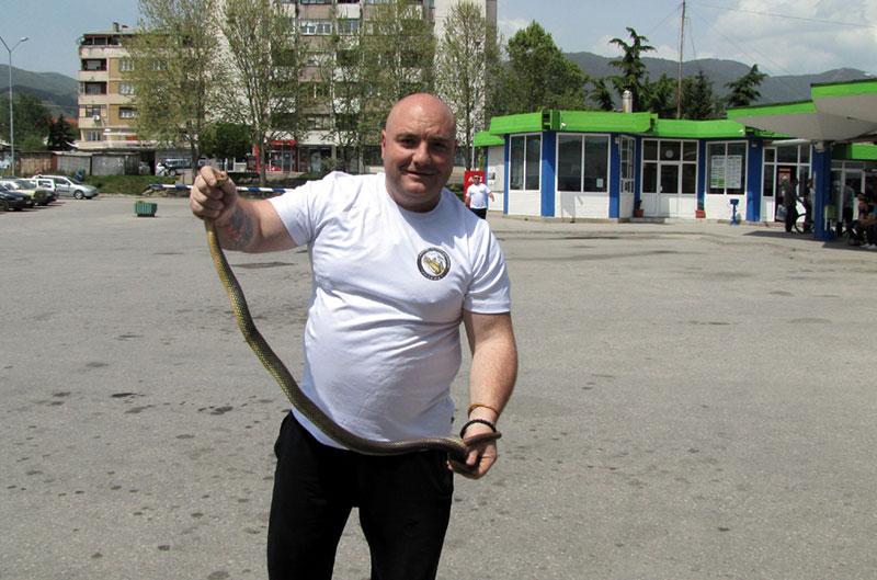 Владица Станковић са смуком који је изазвао панику, Фото Д. Ристић