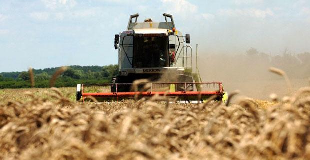 UPRKOS NEPOGODAMA: Imaćemo pšenice i za izvoz